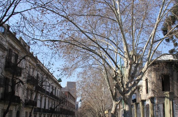 Mirella Buenos Aires tricot étnico 19