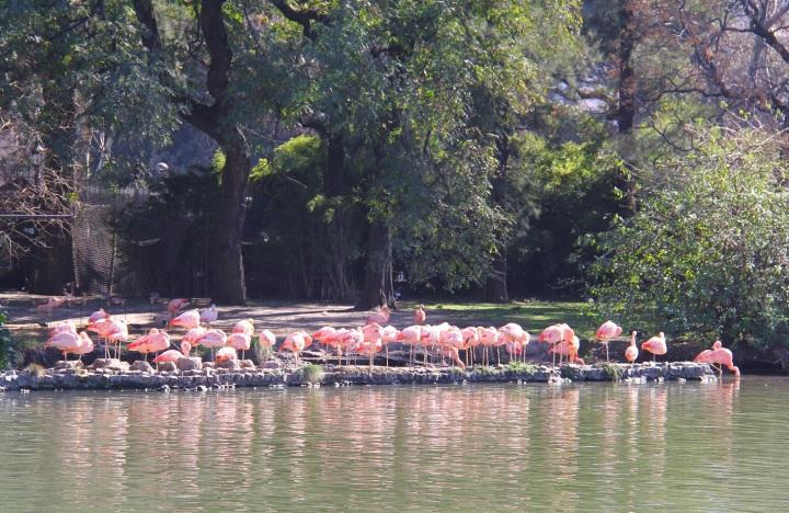 Mirella Buenos Aires zoo 16