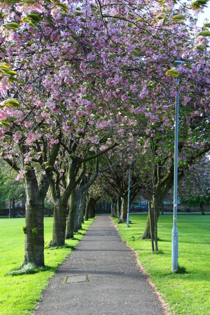Mirella Edimburgo 26